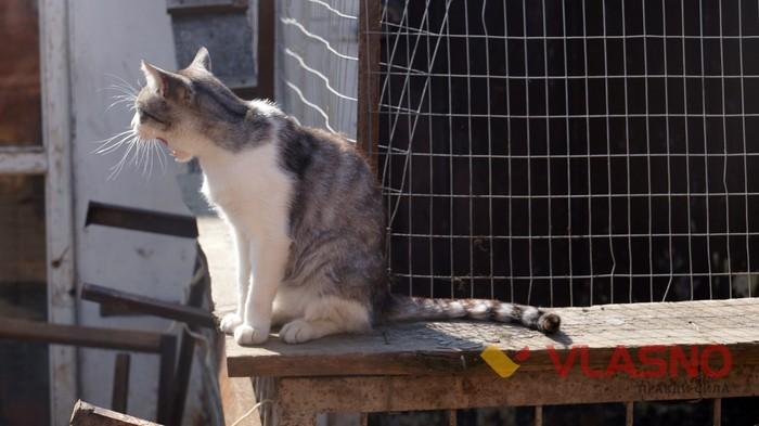 притулок для тварин у Вінниці фото