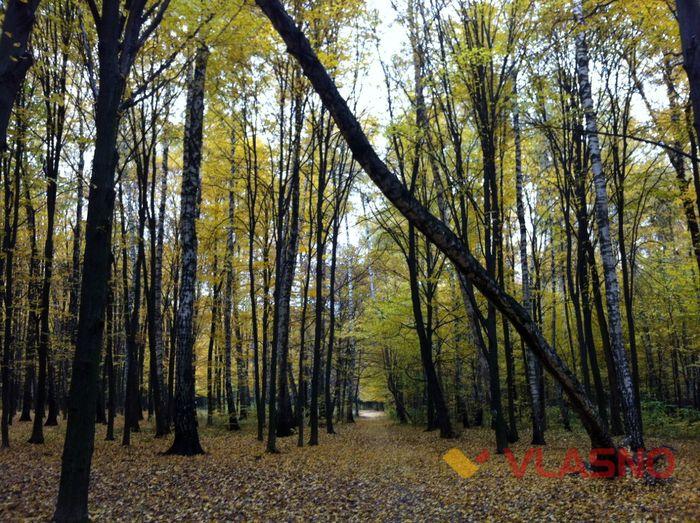 лісопарк вінниця фото