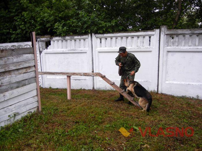 службові собаки колонія фото