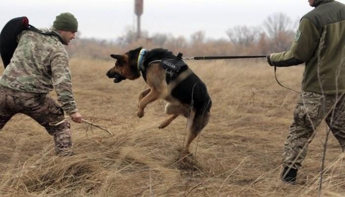 службова собака фото