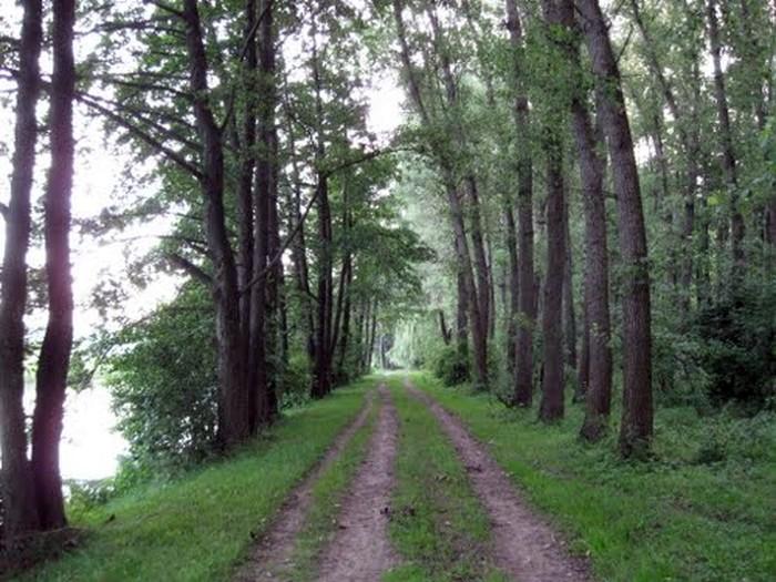 ліс у селі Думенки фото