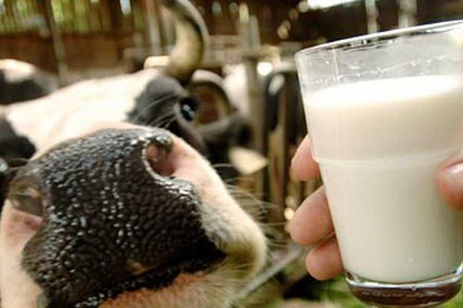 Картинки по запросу як в Вінницькій області виробляють молоко