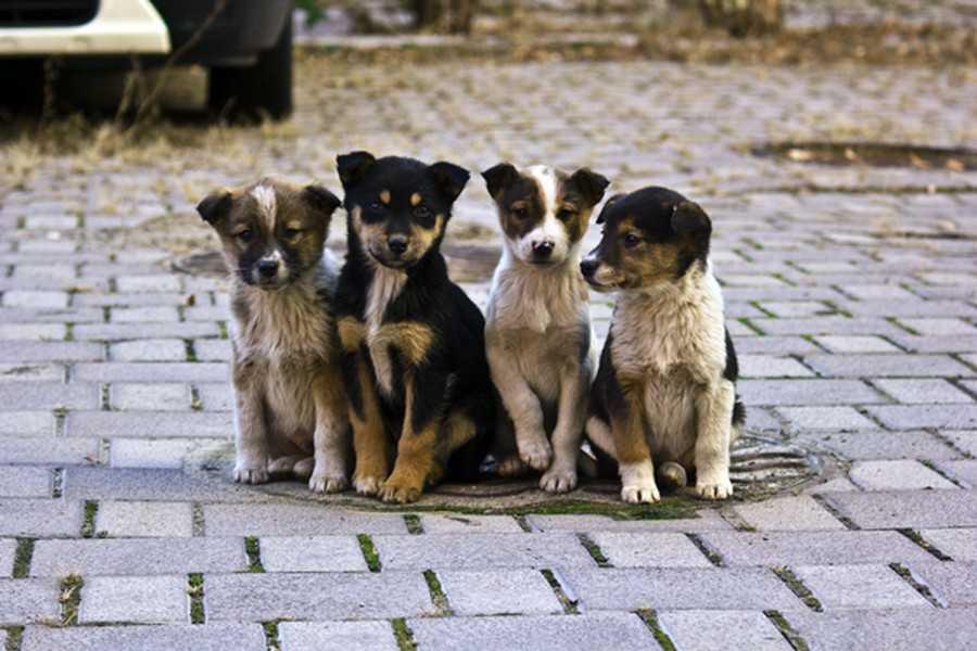 Цього року у Івано-Франківську знову перерахують безпритульних тварин